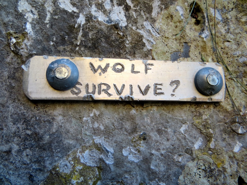 Will The Wolf Survive