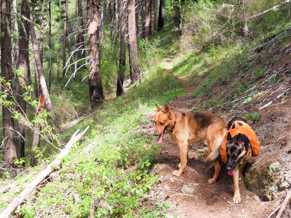 Boulder Creek / Pine Bench